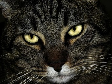 "Loch ""The Cat King"""