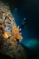 La subacquea al femminile