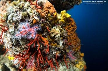 Gli anfratti del Corallo rosso